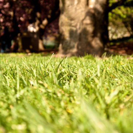 grass-1205263