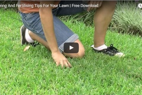 How to Maintain Your Turf